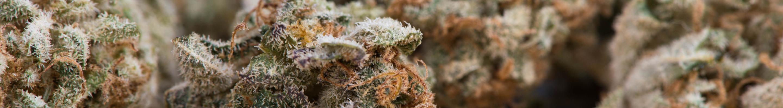 banner marijuana